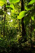 stock photo of rainforest  - Beautiful green dense nature in the amazon rainforest - JPG