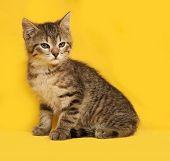 pic of yellow tabby  - Tabby nice kitten sitting on yellow background - JPG