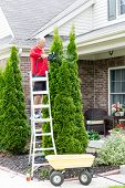 stock photo of house-plant  - Senior Man on a Steel Ladder Cutting Tall Thuja Occidentalis Plant Using Hedge Trimmer Tool Outside the House - JPG