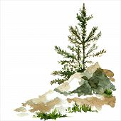 stock photo of redwood forest  - young pine trees and rocks drawing by watercolor - JPG