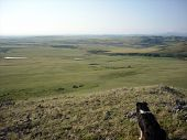 stock photo of prairie  - cattle dog looking out over a long view of the foothills and prairie from the top of a hill - JPG