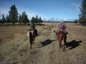 stock photo of cowgirl  - two cowgirls heading out to gather stray cattle - JPG