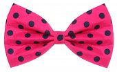 stock photo of bow tie hair  - Hair bow tie pink with dark blue dots - JPG