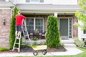 image of cutting trees  - Yard work around the house trimming Thuja trees or Arborvitae with a middle - JPG