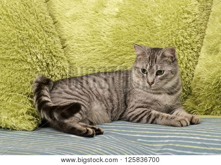 poster of Cat, resting cat on a sofa in colorful blur background, cute funny cat close up, young playful cat on a bed, domestic cat, relaxing cat, cat resting, cat playing at home, elegant cat