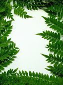 Ferns Over White