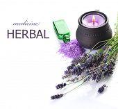 picture of century plant  - Lavender - JPG