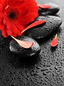 Wet Spa Stones and Red flower