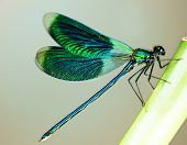 foto of dragonflies  - Beautiful bright Dragonfly - JPG
