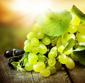 Grapes.Grapevine over vineyard background