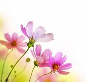 image of beautiful flower  - Beautiful Floral Border - JPG