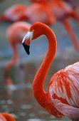 Portrait Of A Flamingo.