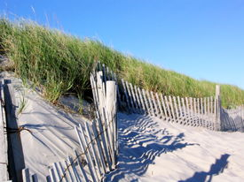 picture of cape-cod  - picket fence on beaches of cape cod - JPG