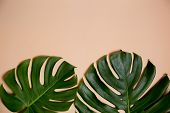 Fashionable Monstera Leaves Decorated Over Creative Nude Beige Pastel  Background poster