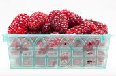 Berries In A Container