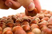 Selecting Hazelnut