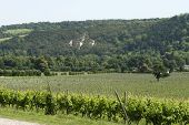 stock photo of dork  - English vineyard at foot of Box Hill on the North Downs - JPG