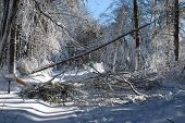 Large Tree And Storm Damage Because Of A Winter Storm poster