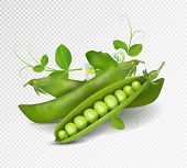 Vector Green Peas. Photo-realistic Vector Pods Of Green Peas With Leaves And Flowers On Transparent  poster
