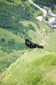 Black Bird Over Fuente De