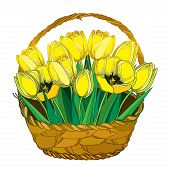 Vector Bouquet With Outline Yellow Tulip Flowers, Bud And Ornate Green Leaves In The Wicker Basket I poster