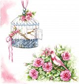 Watercolor Painting.  Hand Drawn Pink Canary Sitting In Rose Bush And Hanging Birdcage Isolated On W poster