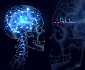 Brain, Vector Illustration For Medicine. A Skull Shot, Neural Networks Of The Brain, Brain Activity  poster