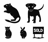Puppy, Rodent, Rabbit And Other Animal Species.animals Set Collection Icons In Black Style Vector Sy poster