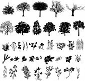 Trees, plants and flower, black silhouette, vector