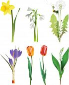 Set of spring flowers. All elements and textures are individual objects. Vector illustration scale t