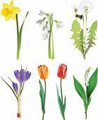 Conjunto de flores de primavera. Todos los elementos y texturas son objetos individuales. Vector ilustración escala t