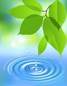 Water splash and leaves. All elements and textures are individual objects. Vector illustration scale to any size.