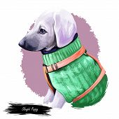 Sloughi Dog Hound Originated From Africa Digital Art. Watercolor Portrait Of African Pet With Short  poster