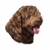 Spanish Water Dog Breed, Purebred Animal Originated From Spain Digital Art. Closeup Of Muzzle, Pedig poster
