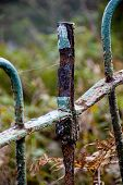 Rusty Old  Green Coastal  Fence Autumn Colours Coastal poster