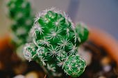 Close Up Of Small Cactus With Soft Selective Focus And Blurred Cactus Background. High Quality Free  poster