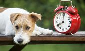 Daylight Savings Time, Cute Pet Dog Puppy With A Red Retro Alarm Clock, Web Banner poster