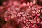 Beautiful Fall Leaves With Water Drops After Rain. Amazing Autumn Colors. Blurred Macro Fall Foliage poster