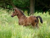 Foal In Long Grass