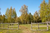 Birch Forest With Fence