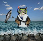 The Cat Underwater Hunter In A Mask And A Snorkel With A Spear Gun Caught A Big Fish In The Sea. poster