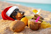 Adorable Black And Tan Dachshund Dog, Buried Under Sand On The Beach, Chill And Relaxing On A Seasho poster