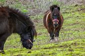Two Grazing Pony With Fern And Palm Branches On Background. Horse Walking On Green Grass And Stones. poster