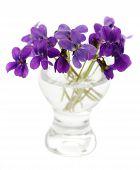 Violets In A Vase