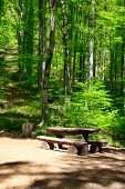 stock photo of centenarian  - Place To Rest In The Forest - JPG