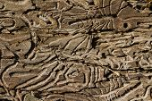 Tree Destruction By Insect Bark Bootle Woodworm. Tree Wood Eroded In Wormholes Suffers From Bark Bee poster