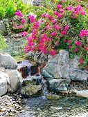 Waterfall And Tropical Garden In Patio Spa