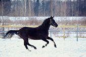 Skipping Black Stallion.