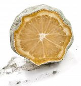moldy lemon isolated over white background