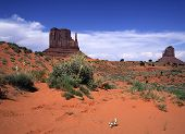Desert Flowers, Monument Valley